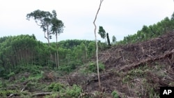 Traditional way of life is threatened by deforestation