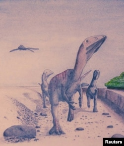 A watercolor illustration depicts the newly discovered dinosaur species Dracoraptor hanigani whose fossils were unearthed in Wales, in this handout image provided by Steven Vidovic, Jan. 20, 2016.