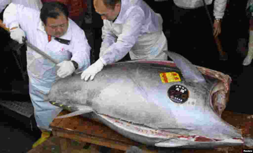 A chef cuts a bluefin tuna at a sushi restaurant in Tokyo January 5, 2012. The 269-kilogram (593 lbs) tuna caught off the coast of northern Japan, was sold at a record of 56.49 million yen ($736,234) in the country's first fish auction of the year. REUT