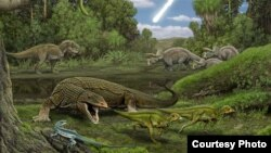 In the foreground, the carnivorous lizard Palaeosaniwa stalks a pair of hatchling Edmontosaurus as the snake Cerberophis and the lizard Obamadon look on. In the background, an encounter between T. rex and Triceratops. (Handout - Artwork by Carl Buell)