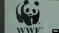 """Le WWF assure """"prendre très au sérieux toute allégation de violations des droits de l'homme""""."""