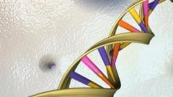中國要建7億男性基因庫震驚世界 美國科學刊物眾編委怒而辭職