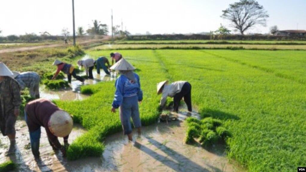 Untuk Atasi Kemiskinan Pemerintah Didesak Prioritaskan Sektor Pertanian