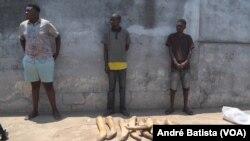 Homens apreendidos com pontas de marfim em Manica