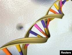 A DNA double helix strand is seen in an undated artist's picture released by the National Human Genome Research Institute to Reuters on May 15, 2012.