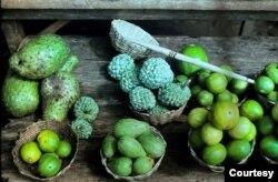 Ở Togo có các trái cây quen thuộc với người Việt (Ảnh: Bùi Văn Phú)