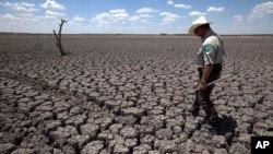 La ONU pronostica un año con altas temperaturas que podría sacudir las siembras en gran parte del planeta.