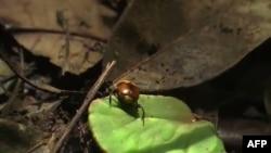 Smitsonijanov institut za tropska istraživanja, u Panama Sitiju, je dom velikog broja vrsta, uključujući sisare, reptile i insekte.
