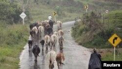 El ganado sano es seguridad para la economía de los países y para el sostenimiento de las comunidades.