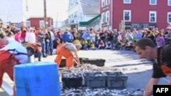 布斯湾渔民节的铲鱼比赛