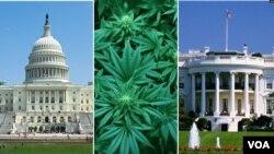 Pemilih AS memutuskan beragam isu dalam pemilihan presiden tahun 2020 ini, termasuk legalisasi ganja (foto: ilustrasi).