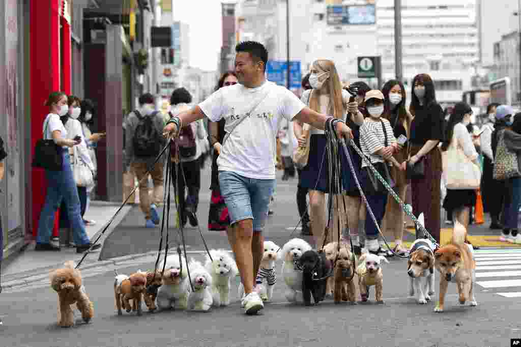 Professional dog walker Nobuaki Moribe leads his clients' pets across an intersection in Tokyo.