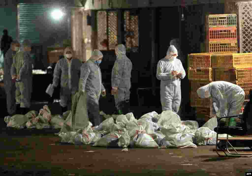 Chinese health workers collect bags of dead chickens at Huhuai wholesale agricultural market in Shanghai.