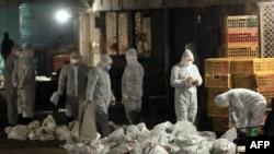 2013年4月中国卫生工作人员在上海一处农贸批发市场收集装死鸡的袋子。
