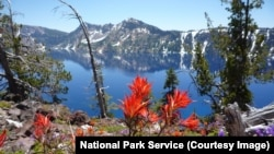 Wildflowers bloom around Crater Lake