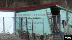 Psi u azilu Prača, novembar 2016. godine