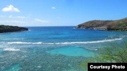 Hanauma Bay ở Hawaii hấp dẫn du khách thích lặn xem cá.