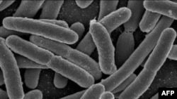 Đức: 4 người chết và hằng trăm người bị bệnh vì dưa chuột nhiễm khuẩn