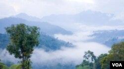 Las guerrilas de las FARC estan internadas en la selva colombiana.