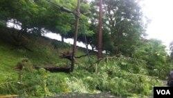 Algunos cables de electricidad fueron afectados por la caída de árboles en las carreteras de la isla.