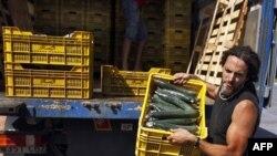 Koli basili ihtimali nedeniyle Avrupa ülkelerinde çöpe atılan salatalıklar