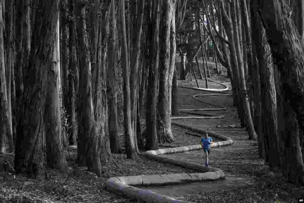 Tim Green melakukan jogging di hutan Ekaliptus atau kayu putih di kawasan The Presidio, San Francisco, California, AS.