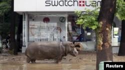 Seekor kuda nil di sebuah jalan yang dilanda banjir di Tbilisi, Georgia, 14 Juni 2015. Hewan-hewan dari kebun binatang kota tersebut termasuk harimau, singa, beruang dan serigala kabur dari kandang mereka yang rusak akibat hujan deras.
