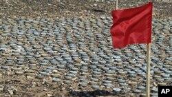 利比亚陆军排除的地雷和警示危险的红旗