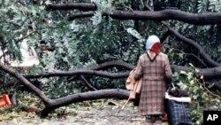 1987年10月16日,倫敦一名婦女站在倒落的大樹前。30年前的那次颶風給英國造成大範圍破壞。奧菲利婭颶風正直撲英國和愛爾蘭。