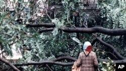 Seorang perempuan mendapati jalan tertutup pohon tumbang di London, 16 Oktober 1987, setelah badai dengan angin kencang yang berlangsung sepanjang malam mengakibatkan kerusakan meluas. Pada peringatan 30 tahun badai ini, 16 Oktober 2017, Badai Ophelia diperkirakan akan menghantam Irlandia dan Azores.