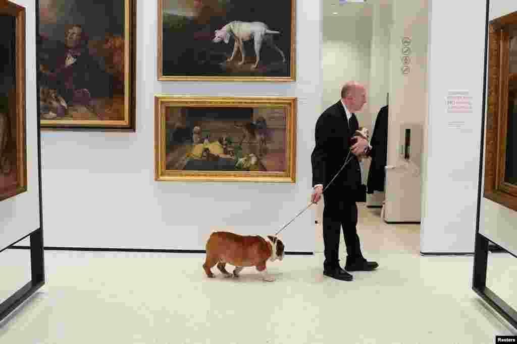 Peter Festa is pictured with his bulldogs at the American Kennel Club's Museum of the Dog during an unveiling of the clubs' most popular breeds in New York, New York.