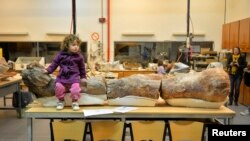 Le fémur du titanosaure au musée Egidio Feruglio en Patagonie, dans le sud de l'Argentine
