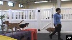 มูลค่าธุรกิจสัตว์เลี้ยงในอเมริกาสูงถึงห้าหมื่นล้านดอลล่าร์ในปีที่แล้ว ส่วนหนึ่งเป็นเพราะเจ้าของเห็นว่าสัตว์เลี้ยงเป็นสมาชิกของครอบครัว
