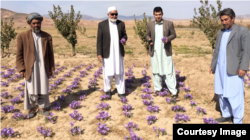 Rumi Spice sells saffron produced by Afghan farmers that the company's US military veteran founders met in Herat Province, Afghanistan.