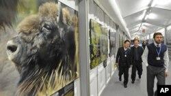 Các đại biểu tại biểu đi ngang qua hình ảnh các loài động vật hoang dã trên đường đến dự Hội nghị biến đổi khí hậu của LHQ tại Warsaw, ngày 11/11/2013.