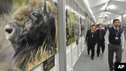 2013年11月11日波蘭華沙: 聯合國氣候變化大會期間代表們走過野生動物照片