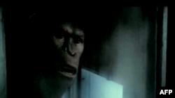 Yeni Hollivud Filmləri: Rise of the Apes (video)