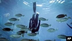 La contaminación de los océanos con objetos como bolsas de plástico pone en peligro la vida marina.