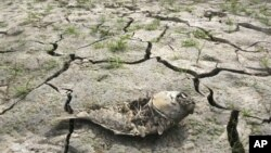 A dead fish on the cracked bed of a reservoir after months of severe drought, Seoul, South Korea, June 26, 2012.