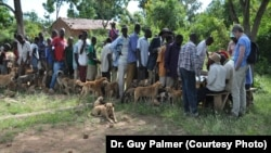 Africans and their dogs wait in line for free rabies vaccinations.