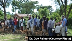 Tanzanians and their dogs wait in line for free rabies vaccinations.