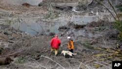 Rescatistas buscan sobrevivientes o cadáveres en el lodo, en Oso, estado de Washington.