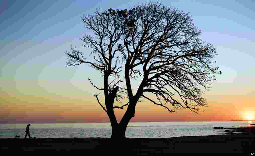 A man walks his dog near an Ombu tree in the coast of Montevideo, Uruguay, Aug. 23, 2016.