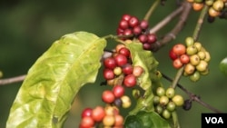 Vietnam's Coffee Industry