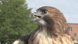 Falconer Uses Birds to Give Young People Hope