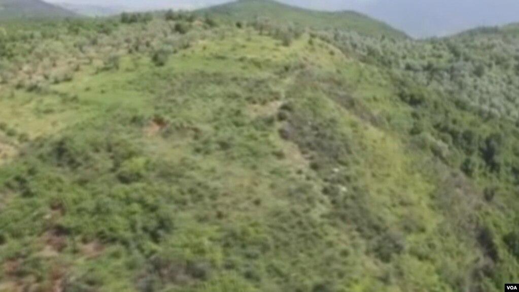 Shqipëri, rënie e fortë e kultivimit të marijuanës