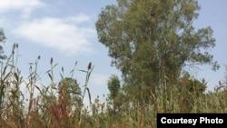 Rwanda drought