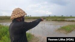 Petani menunjuk areal persawahan yang terendam oleh luapan Danau Poso di Desa Meko, Kecamatan Pamona Barat, Kabupaten Poso, Sulawesi Tengah. (Foto: VOA/Yoanes Litha)