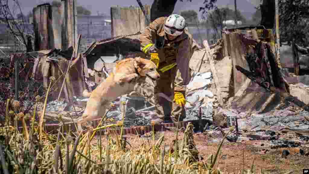Un pompier de San Bernardino avec son chien recherche des cadavres dans les ruines, le 17 août 2016.