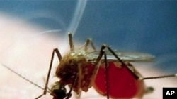 Ninguém deve morrer de malária
